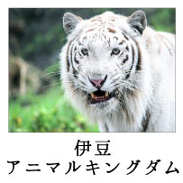 ninki_spot_10