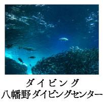 ninki_spot_4_2
